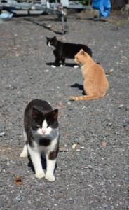 веревочный парк в кошкино, кошкино парк, кошкино парк отзыв, кошкино ленинградская область база отдыха