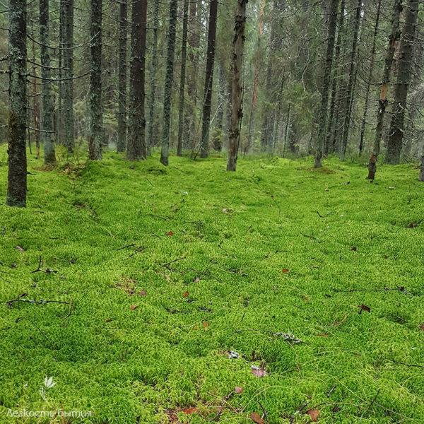Рощино лес